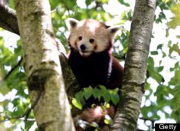 PHOTOS: Amazing Animals From Around The World