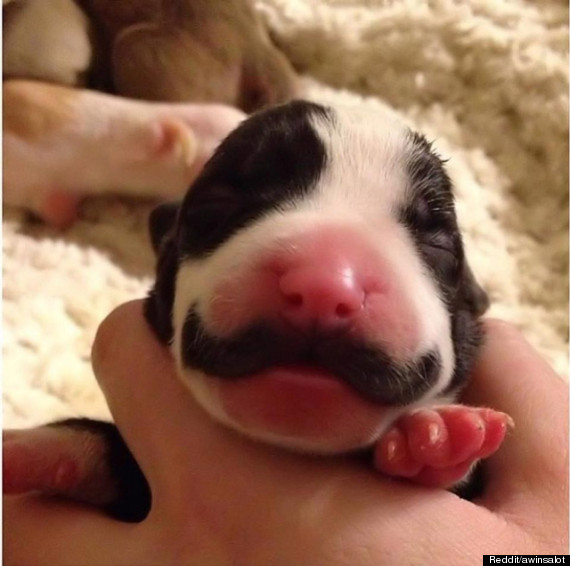 The picture has become a Reddit sensation - and has led to her owner ...