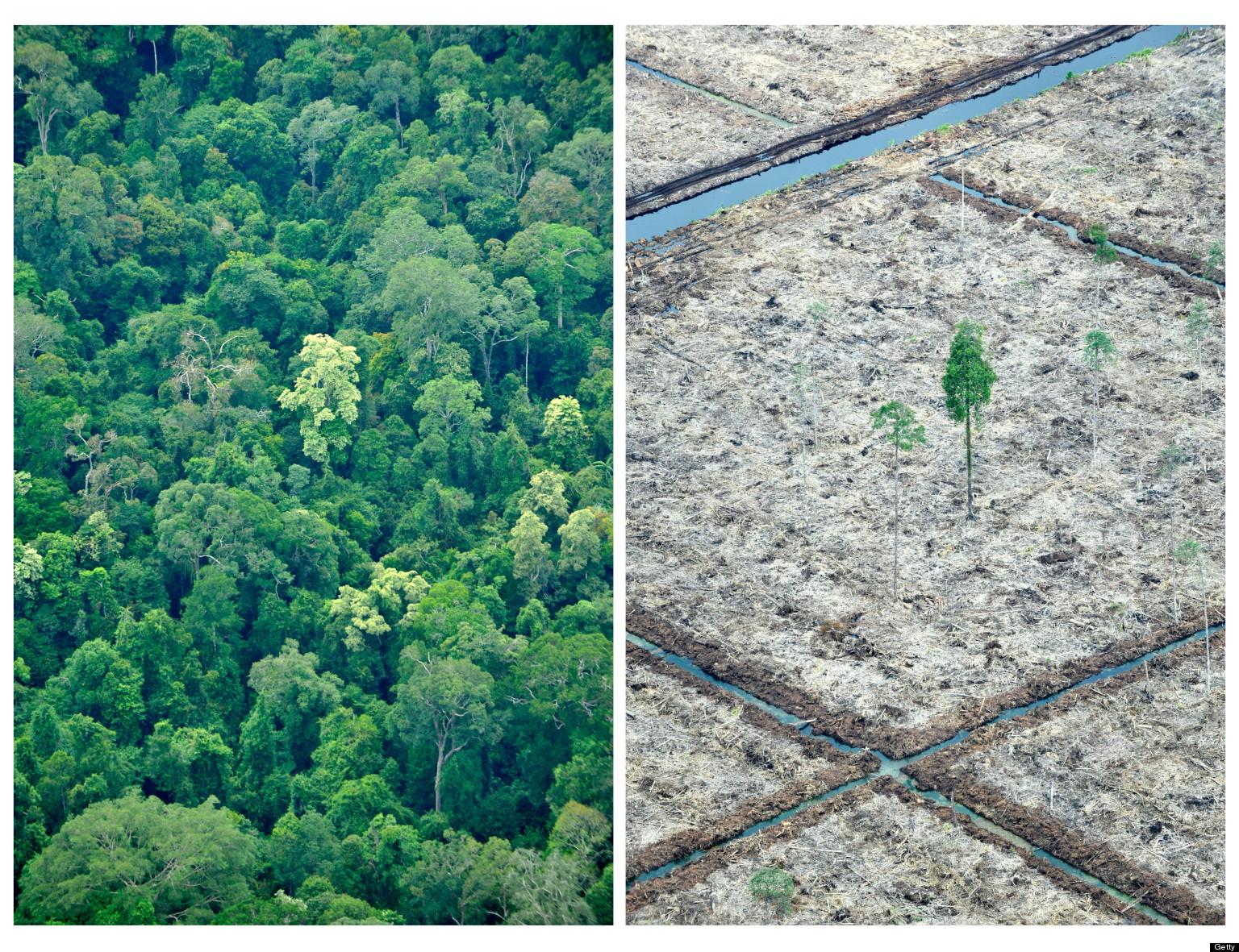 speech about deforestation