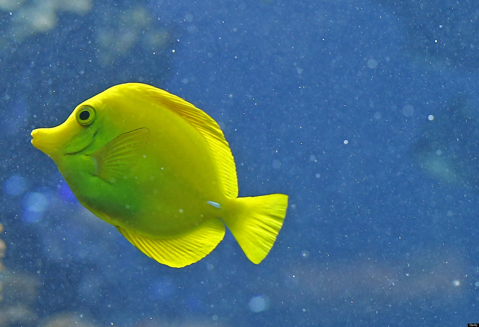 Fish aquarium quotes - Gps Guide 19 Peaceful Photos Of Fish Sure To Make You Feel Less Stressed Huffpost