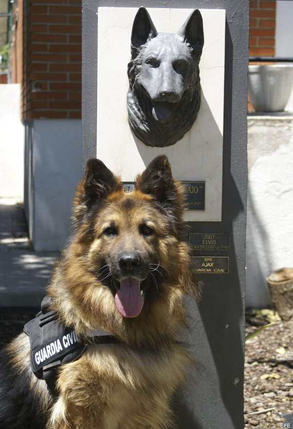 perro de la guardia civil medalla