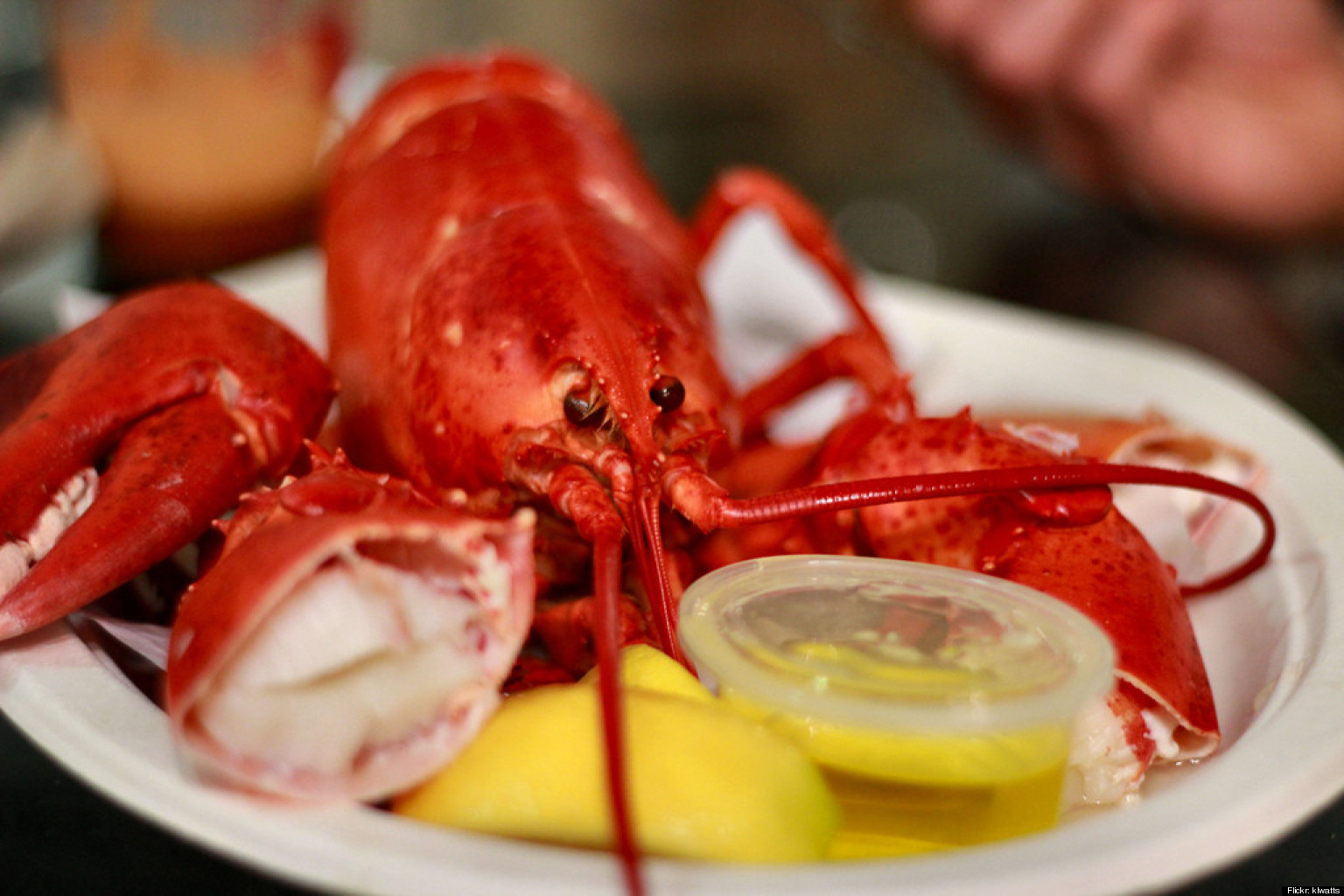 Don't Be Scared, It's Just Lobster