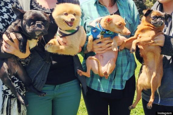 instagram dogs instameet