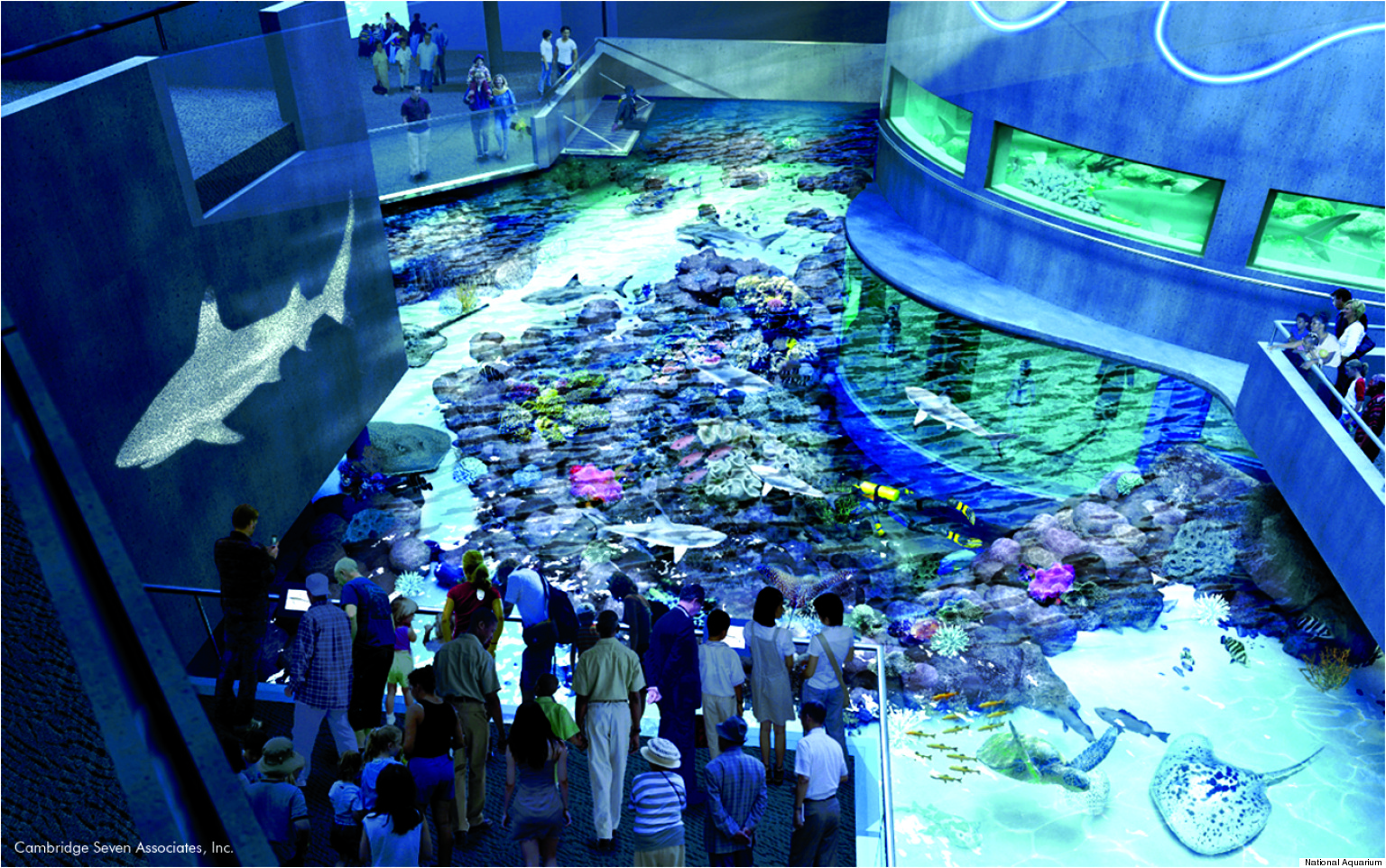 National Aquarium Blacktip Reef Exhibit Opens This Summer With Sharks Coral And A 500 Pound