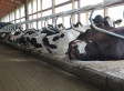 Cow Waterbeds: How Advanced Comfort Technology Sold A Crazy Idea To Dairy Farmers
