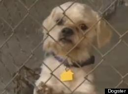 LOOK: Cleveland Kidnap Victim Adopts One Of Captor's Dogs