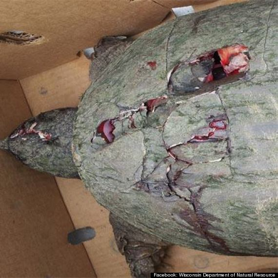 turtle beaten to death