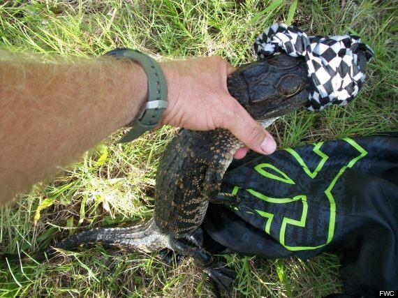 gator in backpack