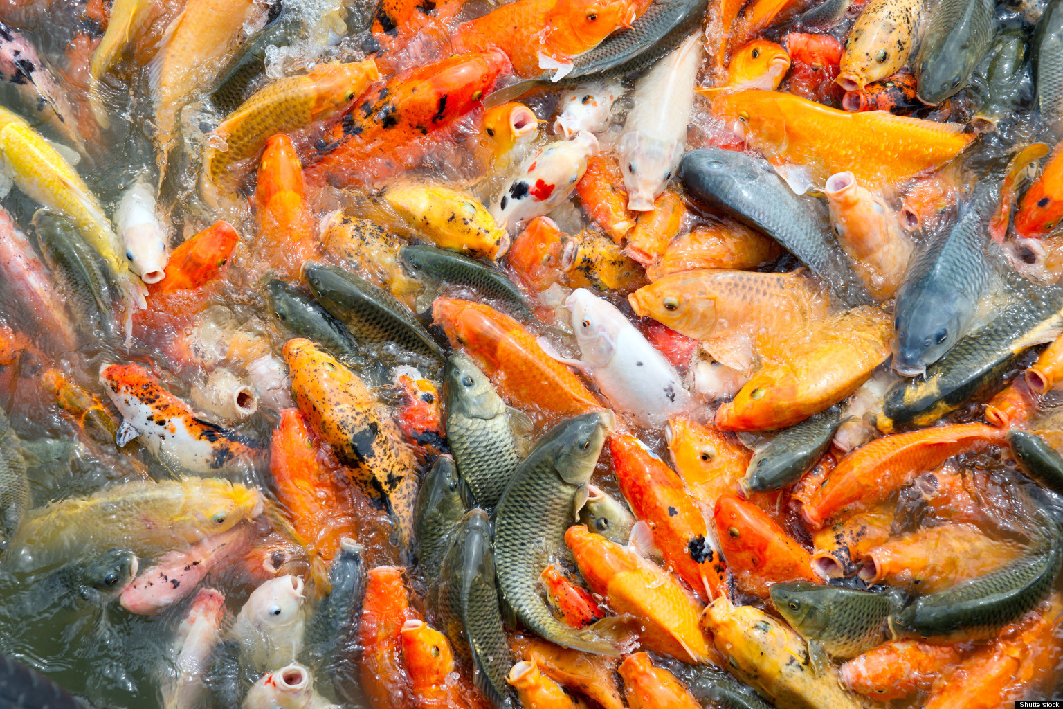 Farmed fish production overtakes beef for the first time for Farm raised fish
