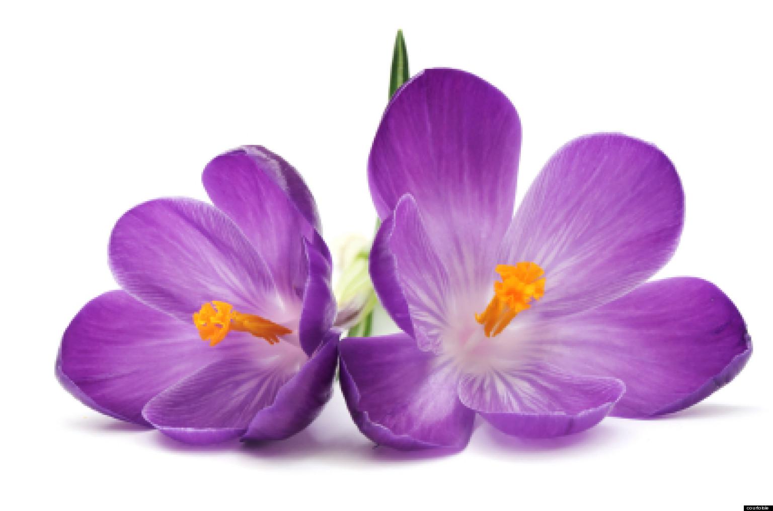 alessandra moro buronzo sant connaissez vous les fleurs de bach. Black Bedroom Furniture Sets. Home Design Ideas