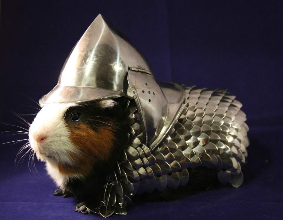 guinea pig armour