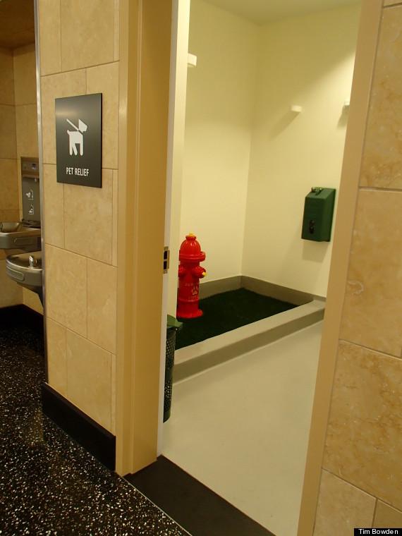 San Diego Airport Dog Bathroom
