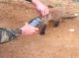 Fox With Its Head Stuck In A Jar Approaches 2 Men For Help (VIDEO)