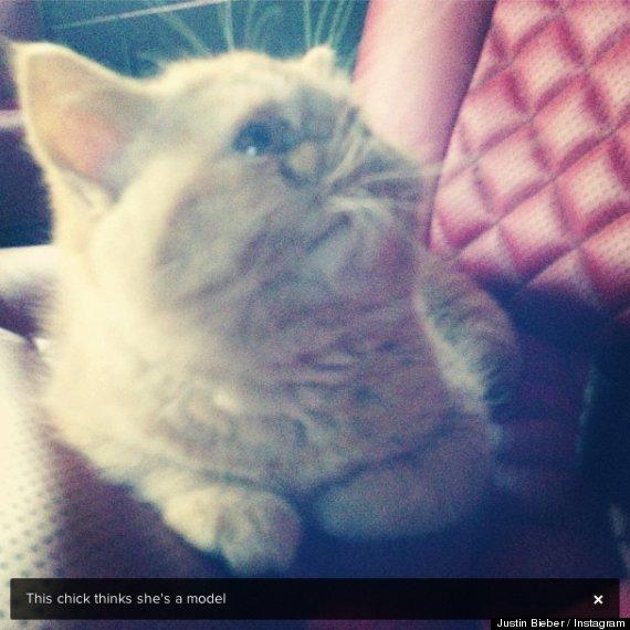 justin beiber cat