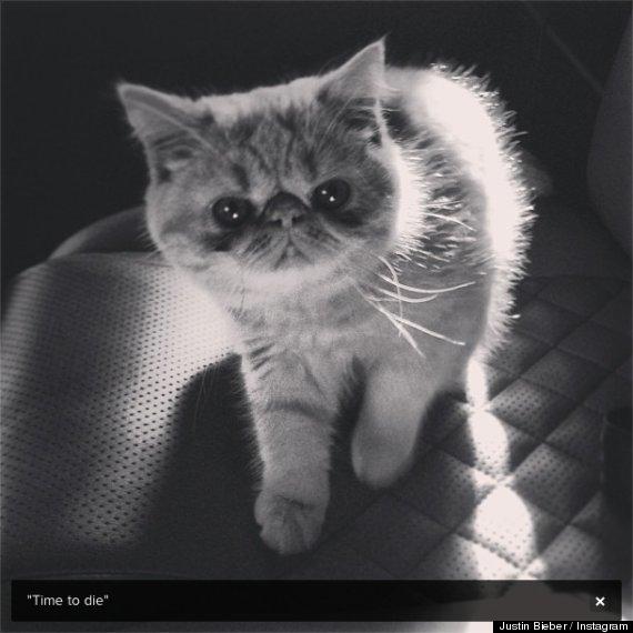 justin bieber cat