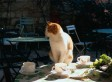 Cat Cafe Plan For Paris Sparks Upset Among Animal Rights Activists