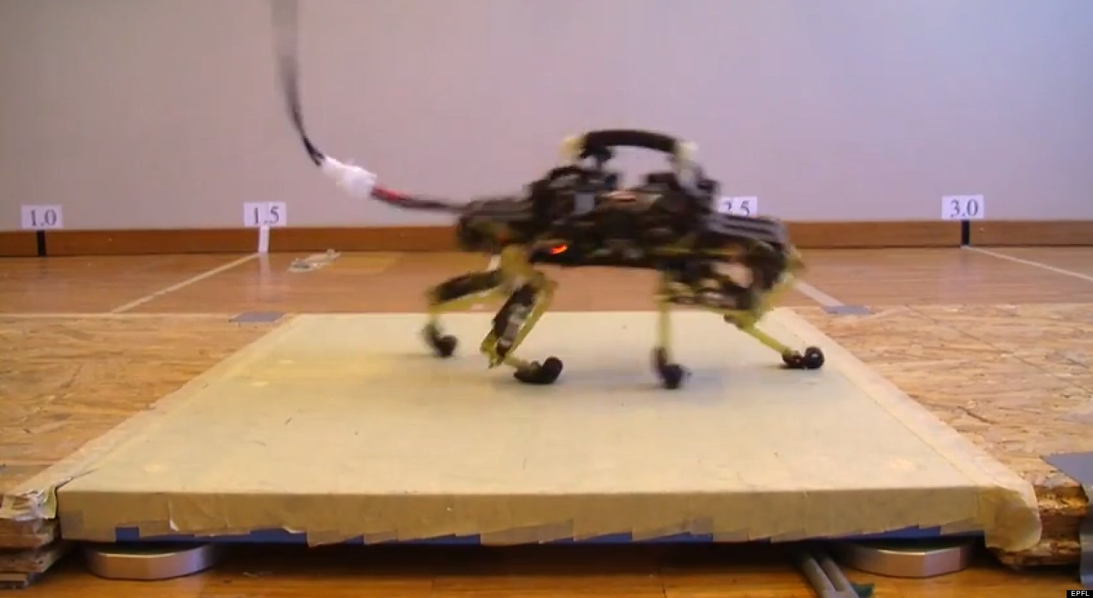 o ROBOT RUNS LIKE CAT facebook