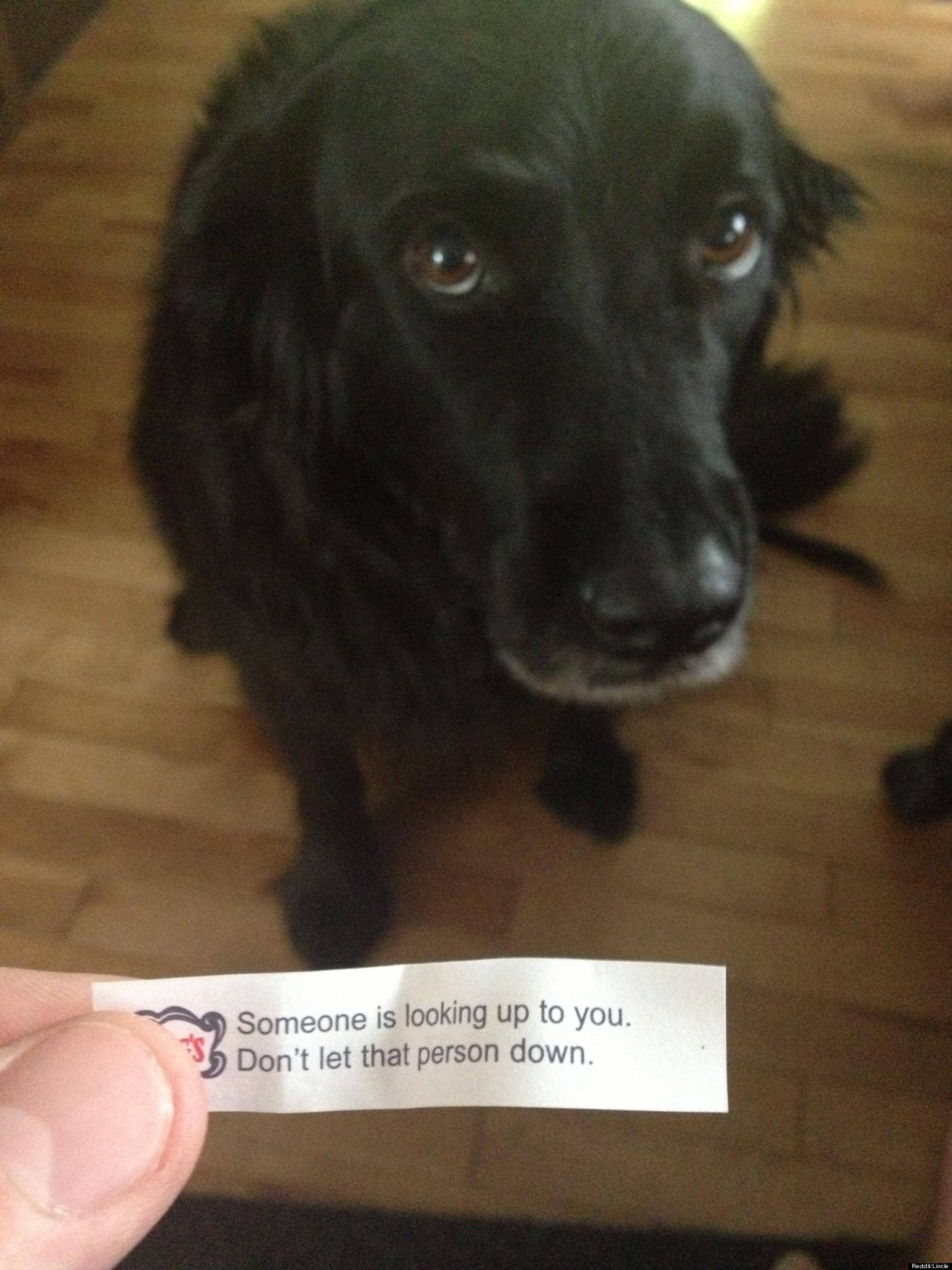 Are Fortune Cookies Good For Dogs