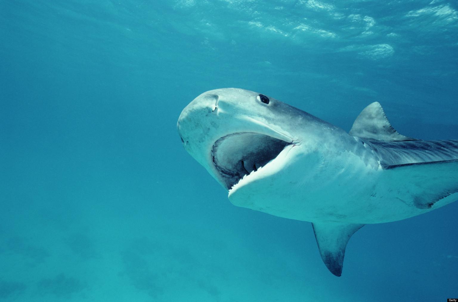 SHARK-ATTACKS-AT-SURFSIDE-facebook.jpg