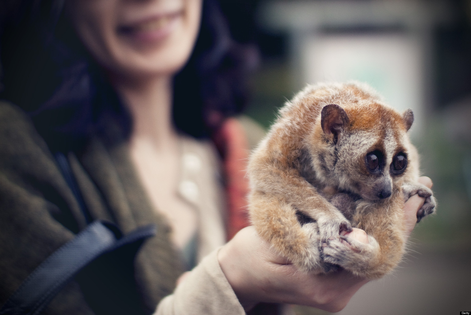 wild animals as pets Don't take wild animals in as pets heather davis many people in the world get pets every day, but why blame them there's nothing wrong with having a friend of another species.