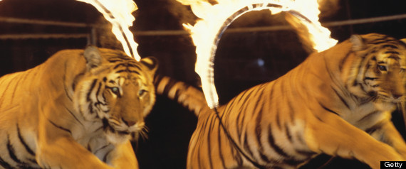 COLOMBIA BANS CIRCUS WILD ANIMALS