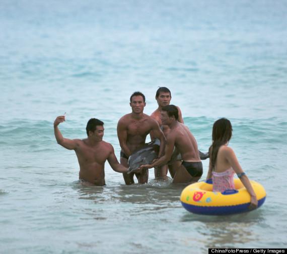 dolphin dies tourists