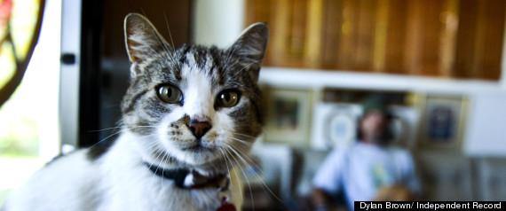 HITCHHIKING CAT