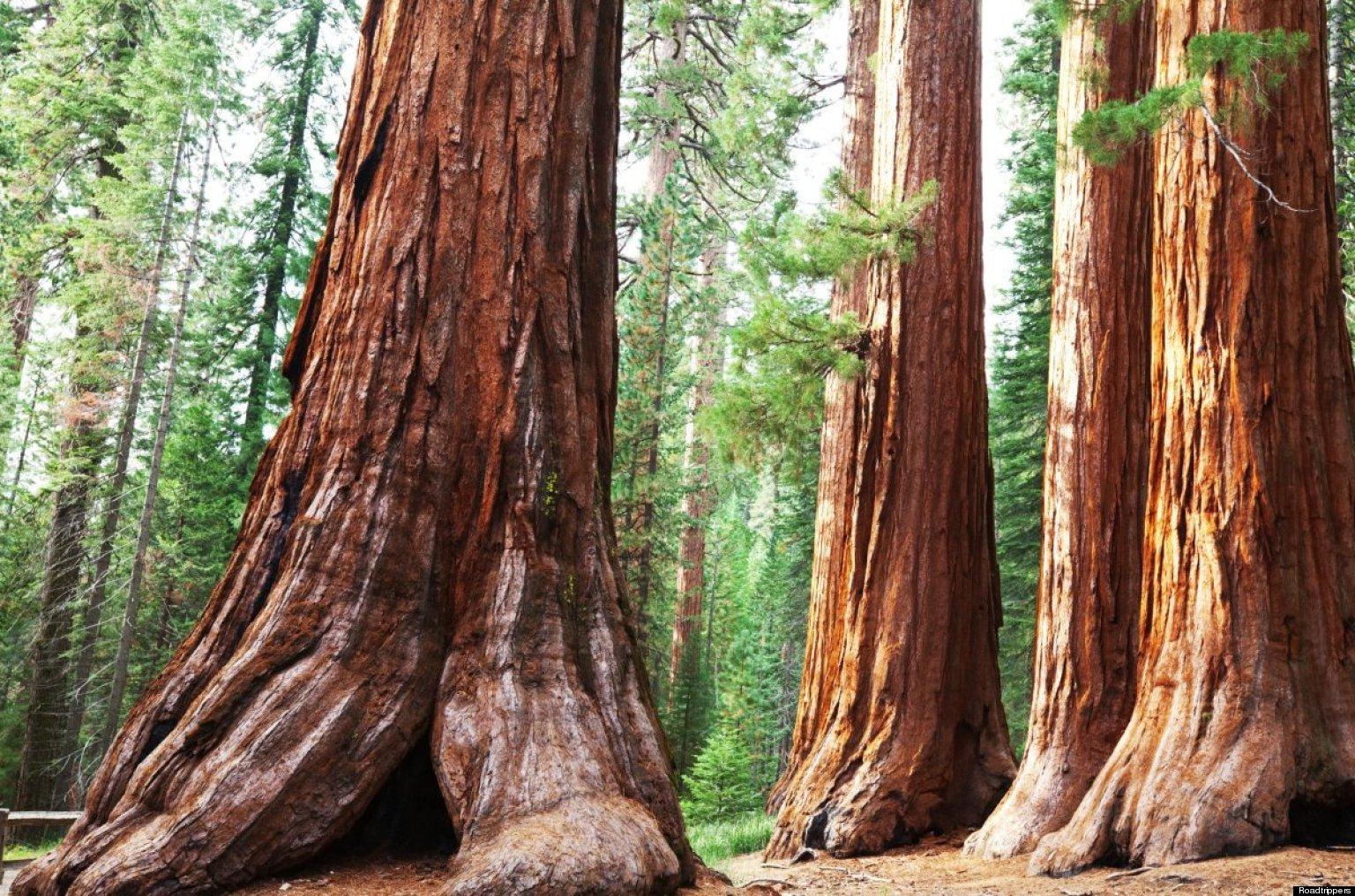 sequoia national park californie