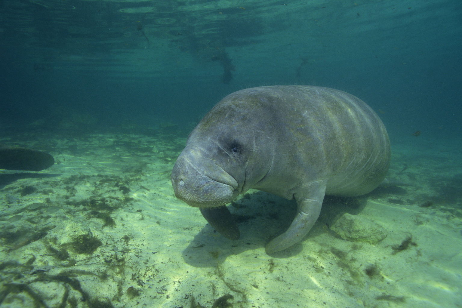 Turn control of endangered species over to whom noah for Endangered fish species