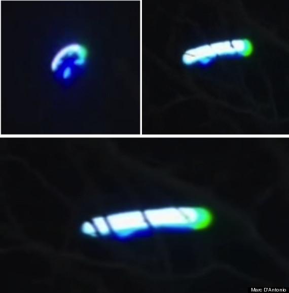 marc dantonio ufo