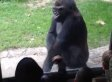 Gorilla Scares Kids Taunting Him At The Zoo (VIDEO)