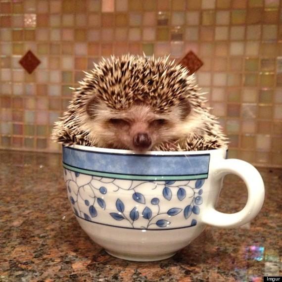 cuphog