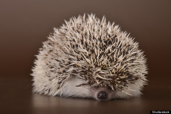 15 Adorable Sleeping Animals To Inspire Your Perfect S