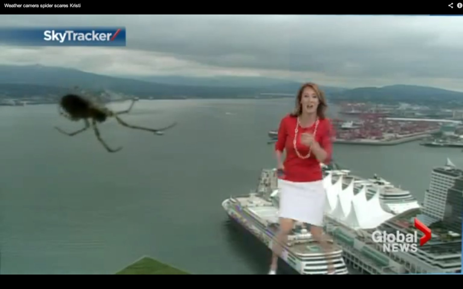 Real life giants spider - photo#24