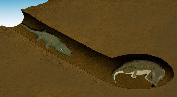 amphibian reptile burrow