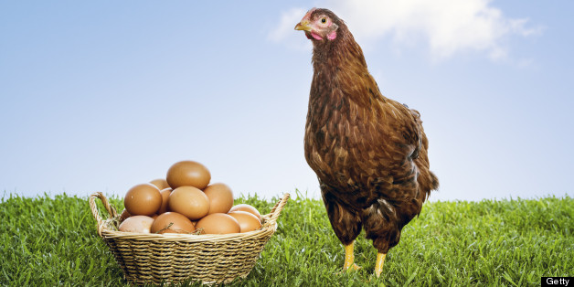 What We Talk About When We Talk About Chickens Huffpost