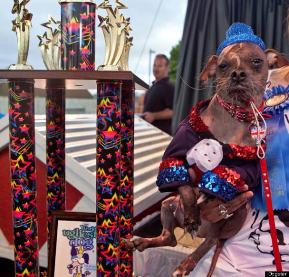 worlds ugliest dog 2013