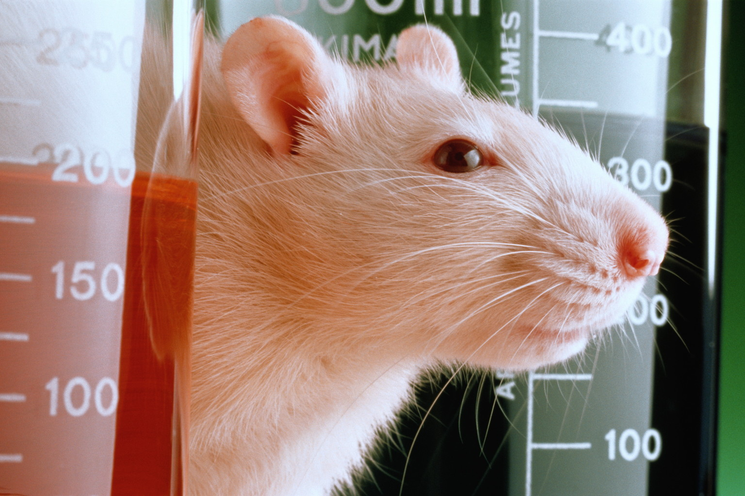 10 Experiments Showing Animals Are Super Smart