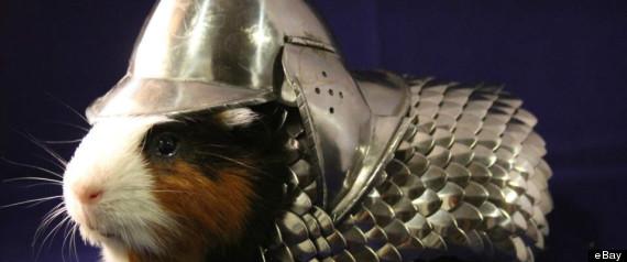 guinea pig armor sold