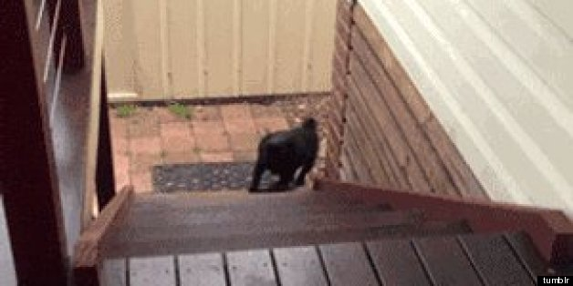 11 Dogs Vs Stairs Gifs Photos Huffpost