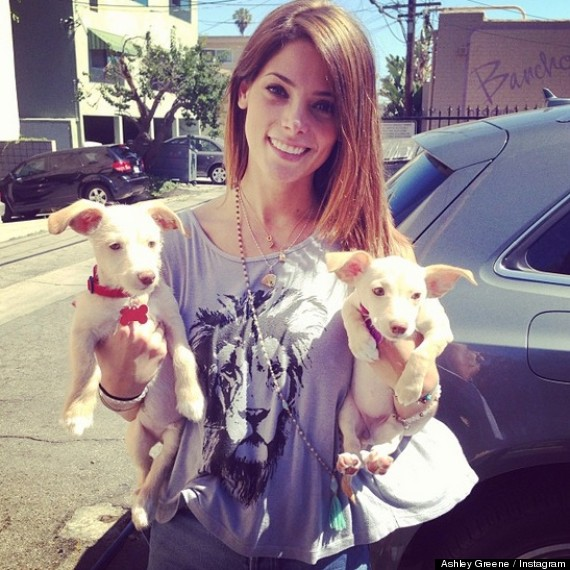 ashley greene new puppies 1