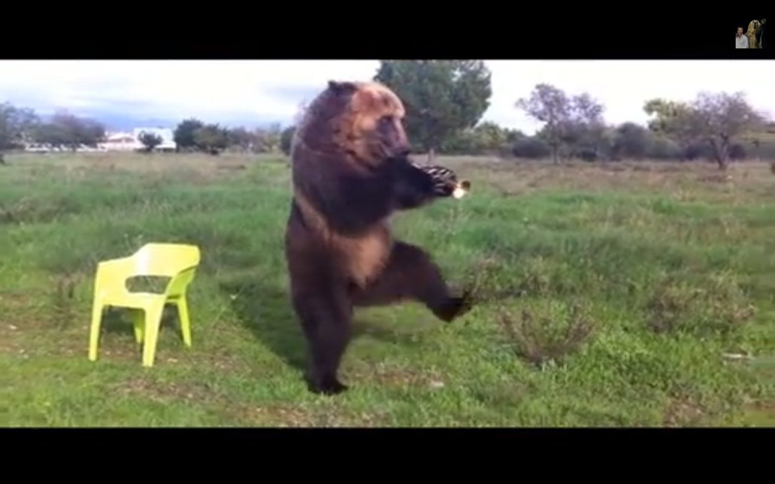 Pavel Vyakin S Amazing Russian Bear Tima Flips You Off