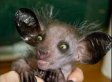 What the Heck Is That? Animals You Didn't Know Existed