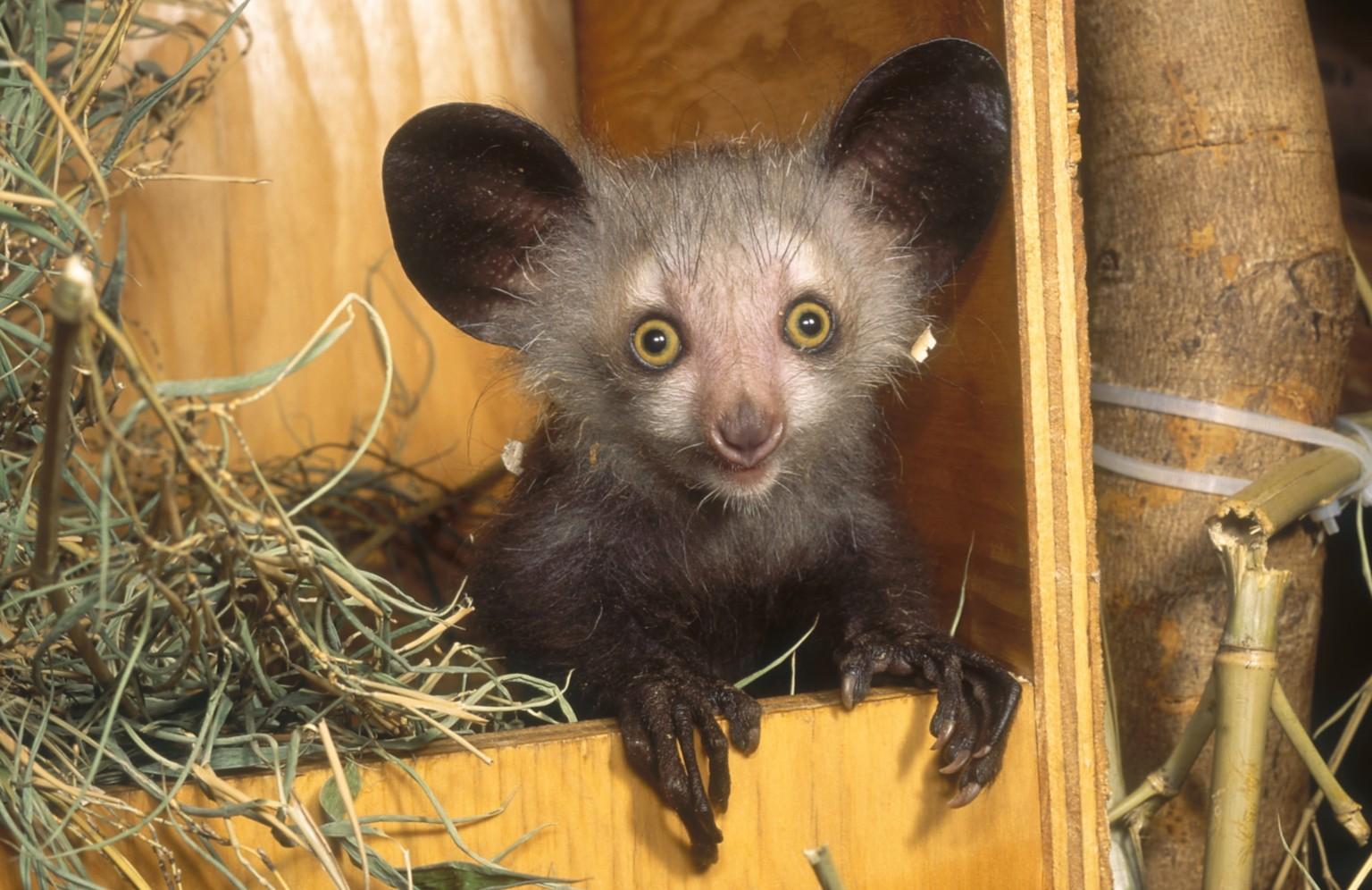 My Madagascar Wildlife...