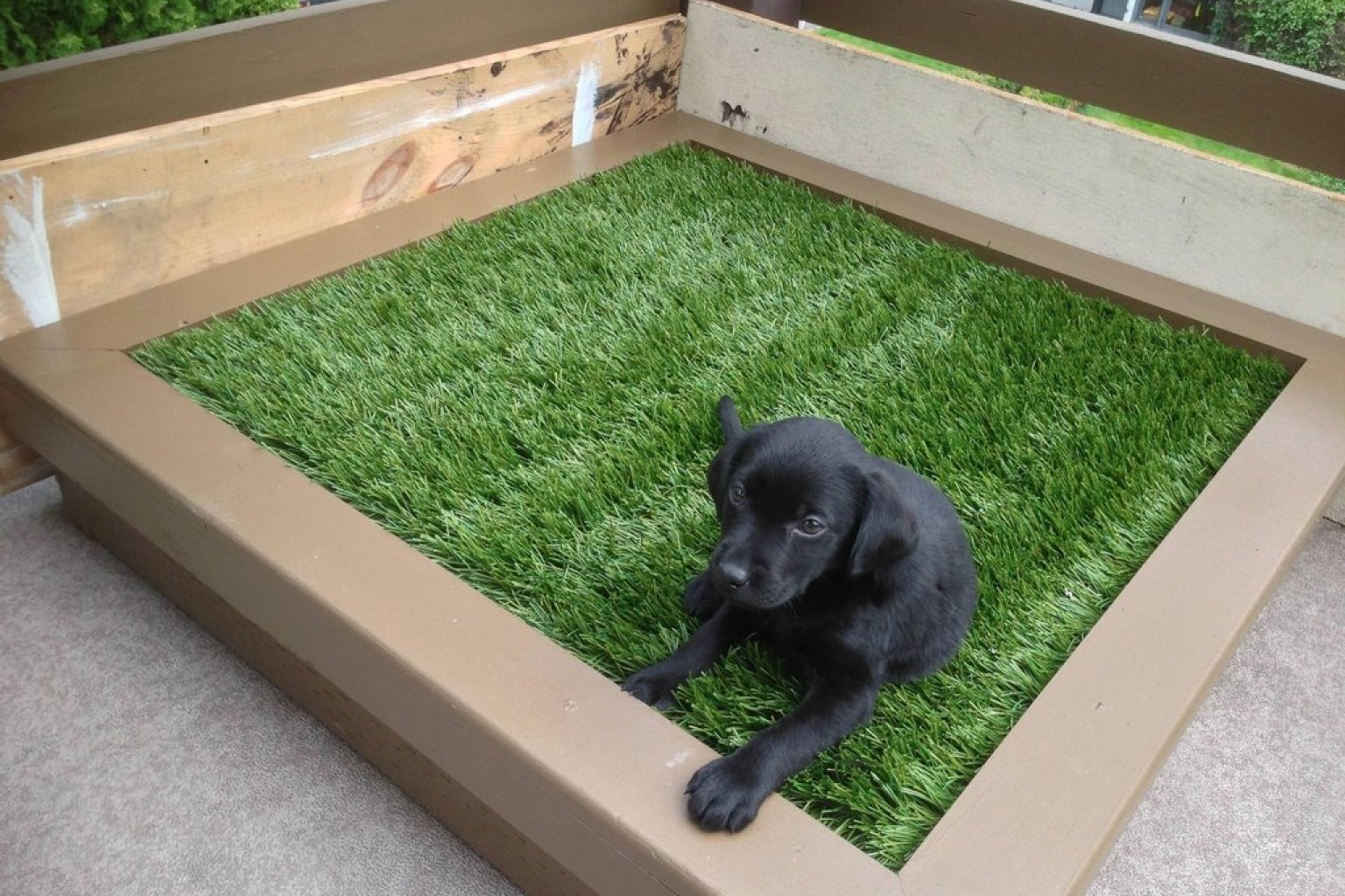 balcony grass patch for dogs