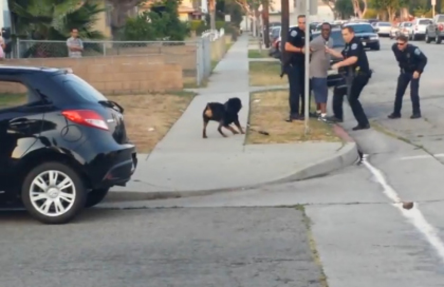 12k In Miles >> Police Shoot Dog, Gunshots Caught On Graphic Video (NSFW ...