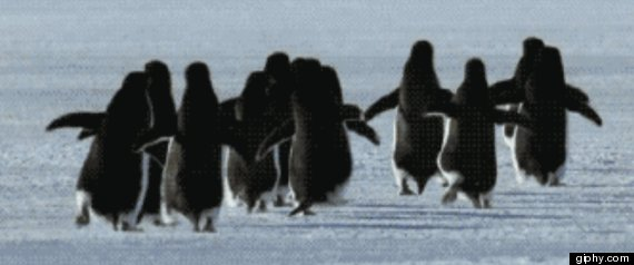 running penguins gif