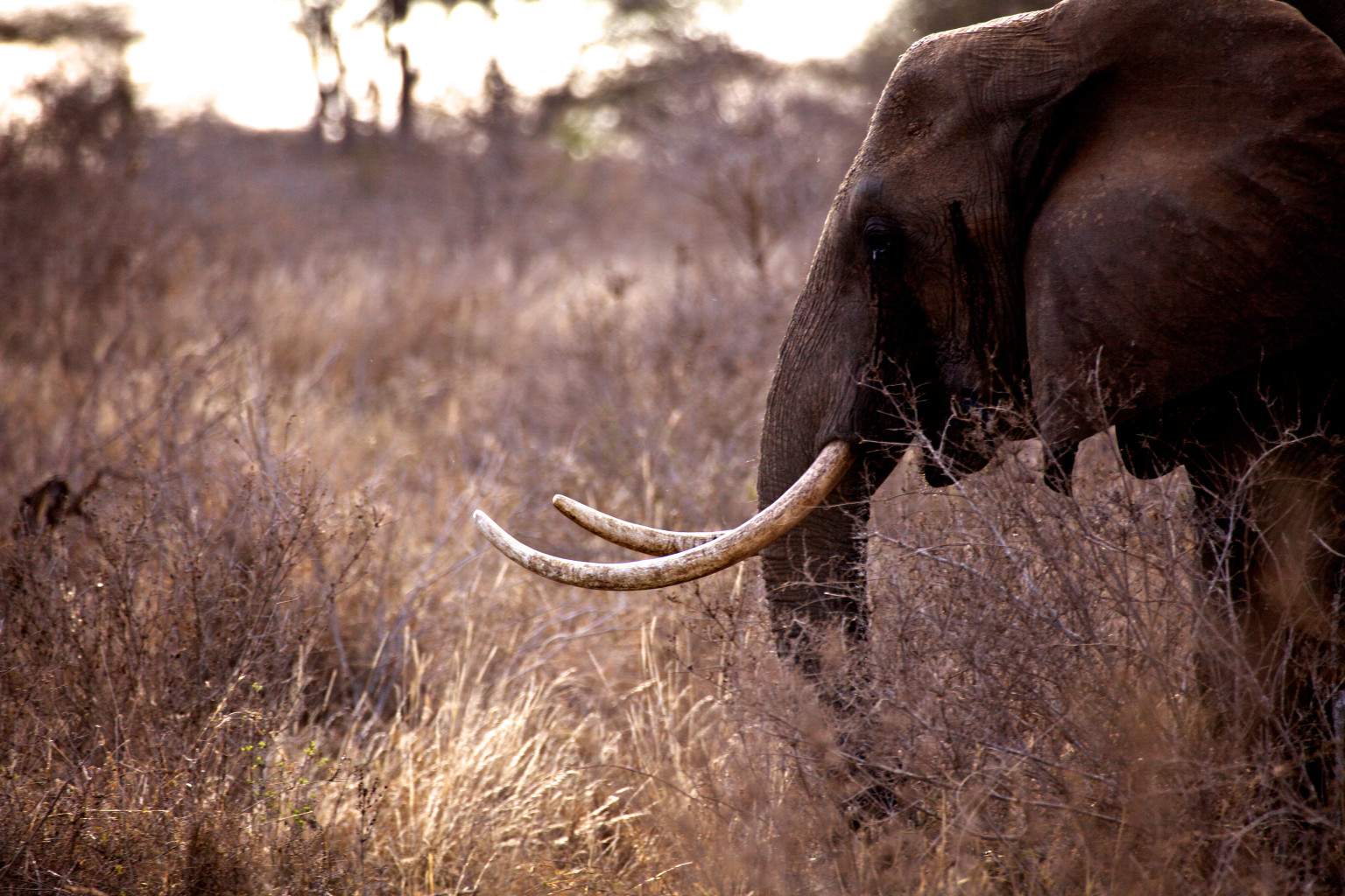 Obama S Executive Order To Combat Wildlife Trafficking