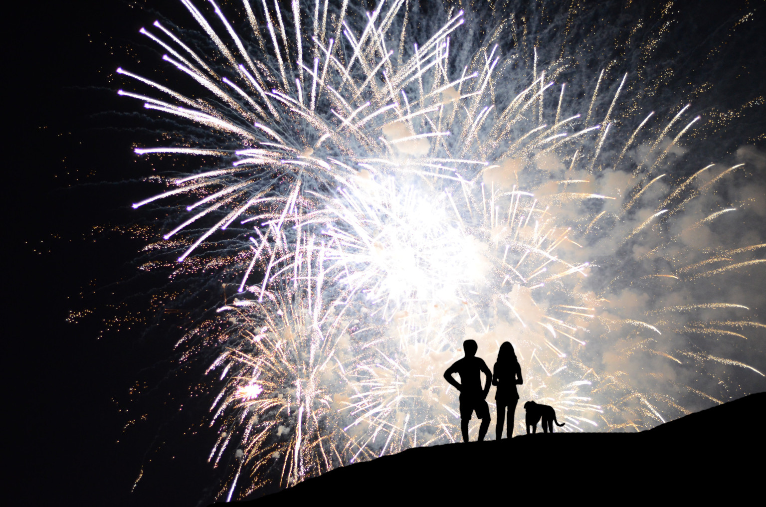 Image result for fireworks dogs