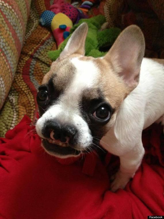 lentil puppy helps kids